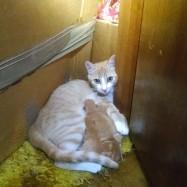 Mama Cat 52814
